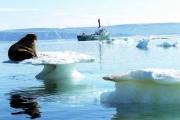 Пока учёные поймут, что происходит с арктическим льдом, он растает