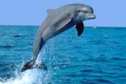 Дельфины - самые интеллектуальные существа на планете