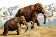Почему исчезла мамонтовая фауна?