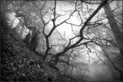 Людей похищает … туман