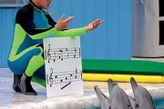 """Программа """"Галилей"""" и ключ к языку дельфинов"""