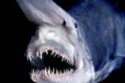 Крым атакует неизвестное морское чудовище
