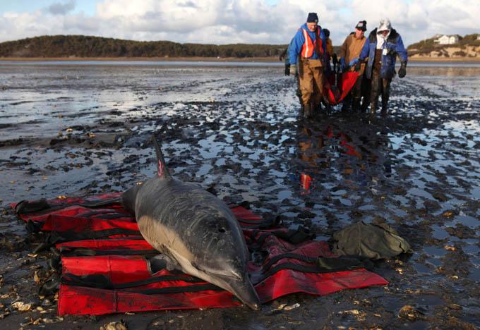 высшие должности фото погибших морских млекопитающих приходите, работаем для