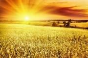 Чтобы побороть потепление и угрозу голода, геоинженеры предлагают заслонить Солнце