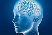 Мозг принимает сигналы из параллельных миров