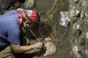 На Шри-Ланке обнаружен скелет древнего человека, жившего 37 тысяч лет назад
