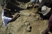 Братская могила мамонтов найдена в Сербии