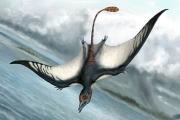 Идентифицирован крошечный и на редкость красивый птерозавр