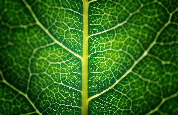 photsynthesis