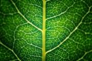 День, когда фотосинтез изменил мир