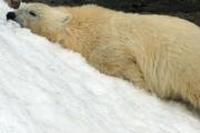 Синоптики обещают самый теплый год в истории