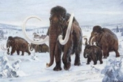 В Якутии нашли пригодные для клонирования клетки мамонта