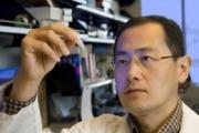 Японские ученые впервые синтезировали клетки, способные уничтожать рак