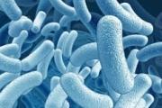 Открыто новое лекарство против туберкулеза