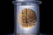 Что скрывает наука о человеческом мозге?