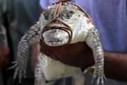 В ЮАР с фермы разбежались 15 тысяч крокодилов