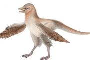 Этот динозавр изменит взгляд ученых на птичью эволюцию