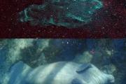 Астрономы обнаружили космическую туманность, которая выглядит как морская корова