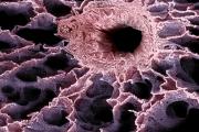 Магнитная левитация позволяет вырастить искусственное лёгкое