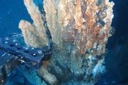 Глубоководная золотая лихорадка угрожает биоразнообразию морских глубин